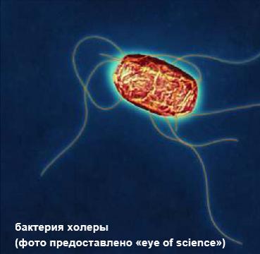 Anseros holera